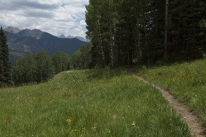 summer hiking trail with wildflowers