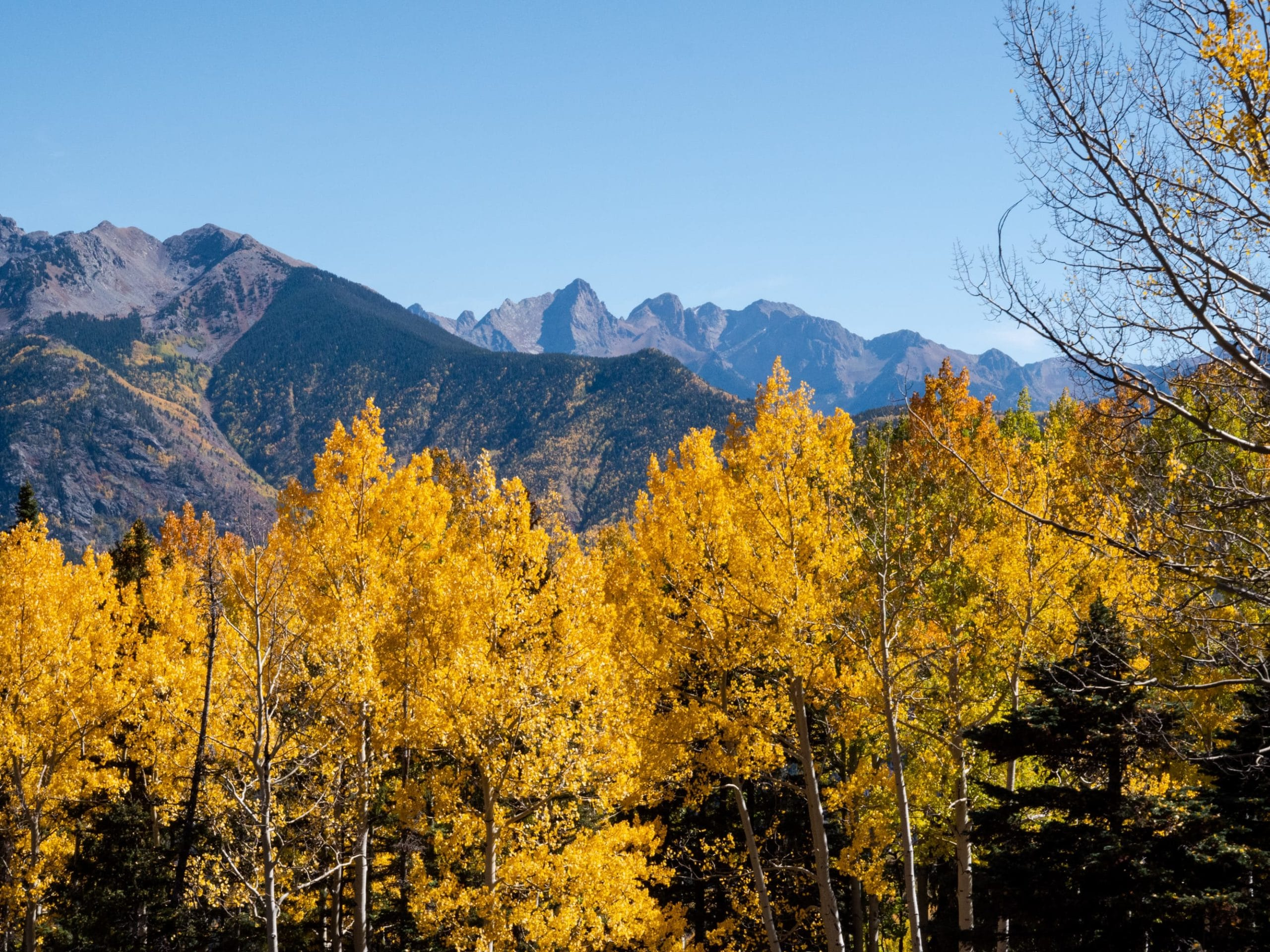 yellow aspen and mountains